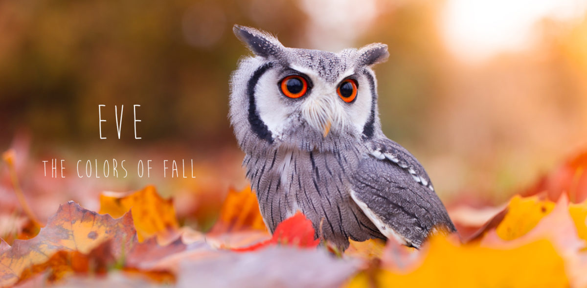 Color of fall Owiwi Owl Photography